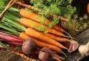 Sağlıklı kök sebzeler sofralardaki yerini aldı
